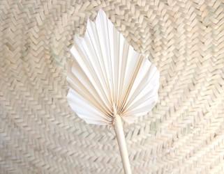 Feuille palmier flèche séchée blanchie