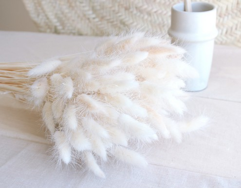 Chaton blanc - Lagurus séché