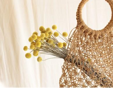 Craspedia jaune fleur séchée