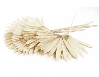 Feuille palmier séchée blanchie